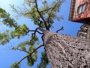 My Old Tree by Keri Douglas