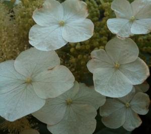 Garden gems