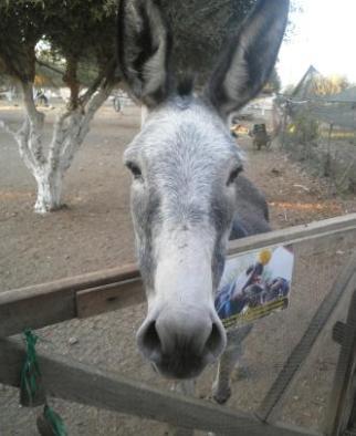 Adopt a Donkey Agria Marina Donkey Rescue http://www.agia-marina-donkeyrescue.com