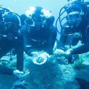 Secrets of Poseidon: Storms, Wars and Shipwrecks: Treasures from the SicilianSeas